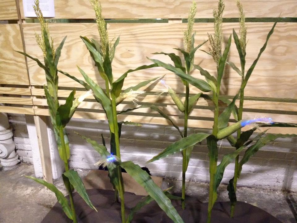 Corn EMO